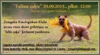 Falšais zaķis, Iecava, 29.09.2013